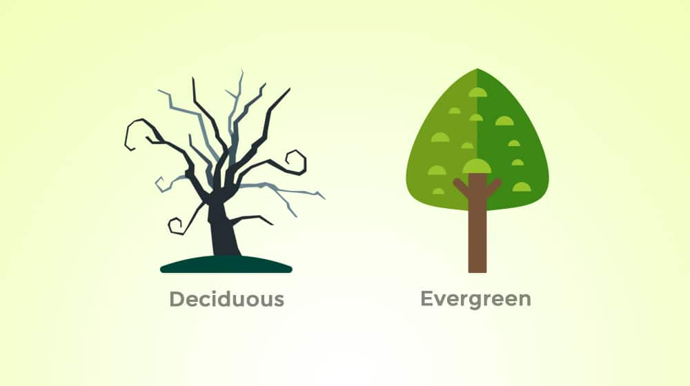 Deciduous vs Evergreen